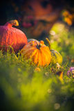 Gifts autumn garden pumpkins basket grass Royalty Free Stock Images