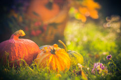 Gifts autumn garden pumpkins basket grass Royalty Free Stock Image