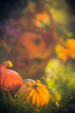 Gifts autumn garden pumpkins basket grass Stock Images