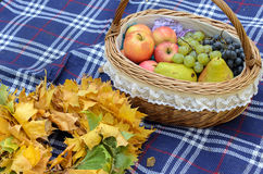 Gifts of autumn Stock Photography