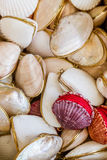 Gifts from Exotic Seashell and Cockleshell Piled Together Royalty Free Stock Photo