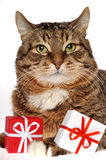 Gifts for friend. Gift & cat Stock Image