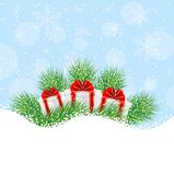 Gifts on the green branches of christmas tree Stock Images
