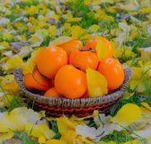 Persimmon fruit. S in basket, autumn background Royalty Free Stock Image