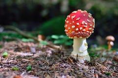 Giftsvamp i skogen royaltyfri foto