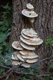 Giftsvamp som växer på en trädstam royaltyfri bild