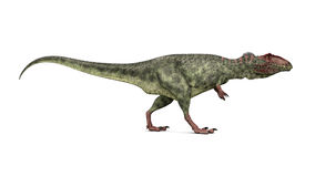 Giganotosaurus ilustração royalty free