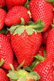 Gigant草莓 免版税图库摄影