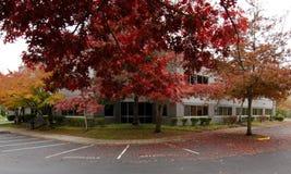 Gigant gałąź dębowy drzewo z czerwonym ulistnieniem zakrywa parking wewnątrz zdjęcie stock