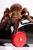Gigant Spinne auf hölzernem Spielzeug Lizenzfreies Stockfoto