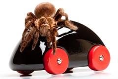 Gigant Spinne auf hölzernem Spielzeug Lizenzfreie Stockfotografie