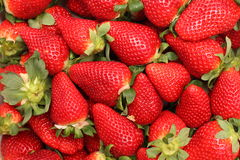Gigant strawberries Stock Photos