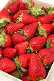 Gigant strawberries Stock Image