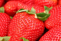 Gigant strawberries Royalty Free Stock Photo