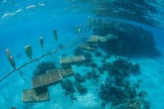 Gigante Clam Farm en Polinesia Foto de archivo