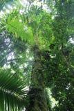 Gigante del bosque Foto de archivo libre de regalías