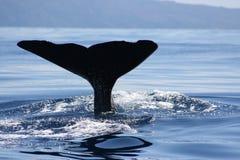 Gigante do oceano Fotografia de Stock Royalty Free