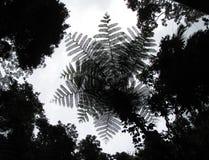 Gigante Fern High en el cielo Fotografía de archivo