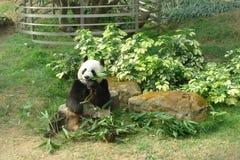 Gigante Panda Pavilion en Coloane Macao Imagen de archivo