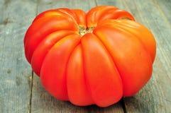 Gigante rojo grande del tomate Imagen de archivo libre de regalías