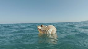Gigante Tun Shell Floating almacen de metraje de vídeo