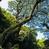 Gigante verde fotografia stock libera da diritti
