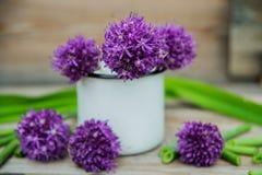 Giganteum dell'allium, fiore viola Fotografia Stock