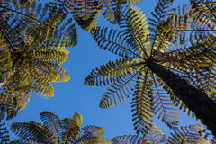 Gigantic ferns Stock Images