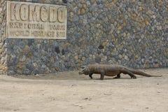 Gigantic komodo dragon in the beautiful nature habitat on a small island in Indonesian sea Royalty Free Stock Image