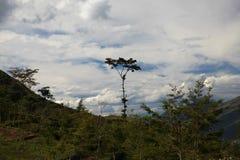 Gigantischer Baum auf einem Hintergrund von weißen Wolken Stockfotografie
