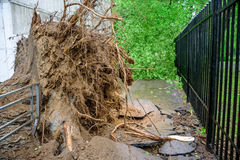 Gigantischer gefallener Pappelbaum gestürzt und Sprünge im Asphalt infolge des schweren Hurrikans in einem von Höfen von Moskau Lizenzfreies Stockbild