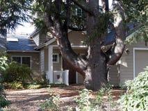 Gigantisk tree Arkivfoton