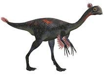 Gigantoraptor Stock Photos