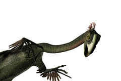 Gigantoraptor Stock Images