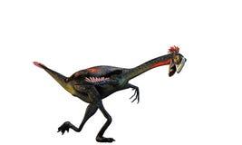 Gigantoraptor Royalty Free Stock Image