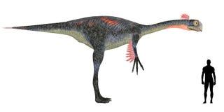 Gigantoraptor Size Comparison vector illustration