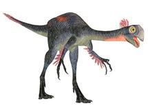 Gigantosaurus Stock Images