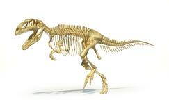 Gigantosaurus-dinosaurus volles Foto-realistisches Skelett, Perspektivenansicht. lizenzfreie abbildung