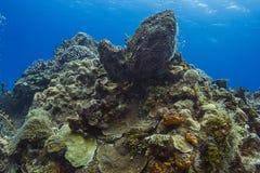 Gigantyczna gąbki rafa Fotografia Royalty Free