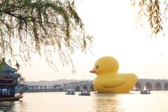 Gigantyczna Gumowa kaczka Debiutuje w Pekin Fotografia Stock