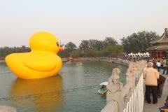 Gigantyczna Gumowa kaczka Debiutuje w Pekin Obraz Royalty Free