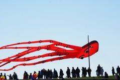 Gigantyczna ośmiornicy kania Zdjęcia Royalty Free