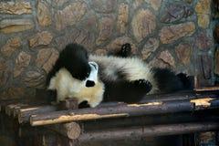Gigantyczna panda Fotografia Stock