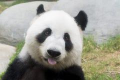 Gigantyczna panda obraz stock