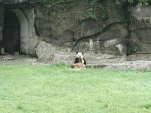 Gigantyczna panda w Chiny fotografia royalty free