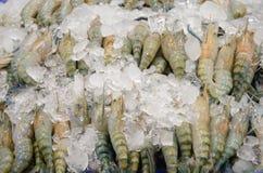 Gigantyczna słodkowodna krewetka z lodem obraz stock