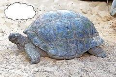 Gigantycznego tortoise kreskówka Fotografia Royalty Free