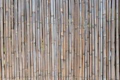 Gigantycznej trzciny ogrodzenie Obraz Royalty Free