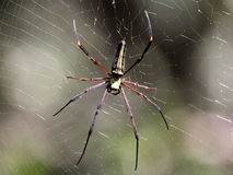 Gigantyczni Drewniani pająki obraz royalty free