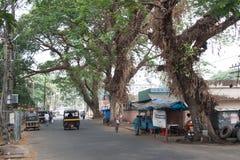 Gigantyczni tropikalni drzewa Zdjęcie Stock